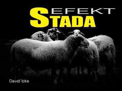 Stado Ovce
