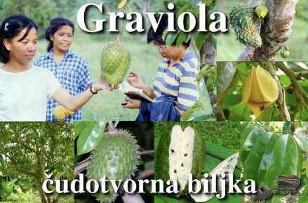 GRAVIOLA - biljka koja ubija rak Graviola