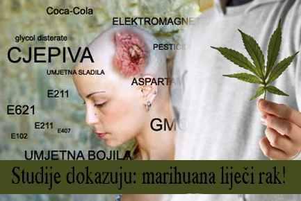 Marihuana lijeci rak