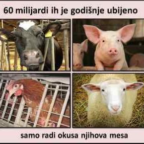 Za sve one koji još uvijek lažu sami sebe po pitanjuprehrane mesom...