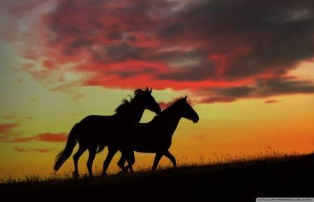 konj divlji