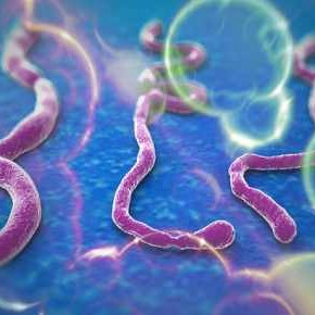 Koloidnim srebrom protiv ebole