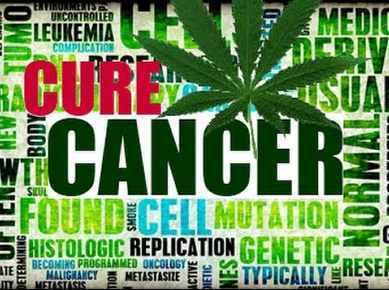 Kanabis marihuana rak