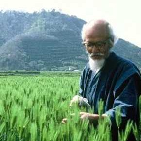 Prirodno poljodjelstvo - manje je više