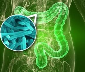 Probiotici i bolesti koje liječe