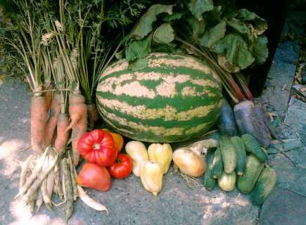 Sve na slici uzgojeno je u mom vlastitom vrtu - organski uzgoj