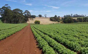 ekološka poljoprivreda i zdravlje
