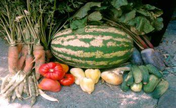 permakultura hrana vrt