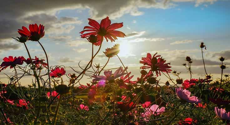 sunce i D vitamin zdravlje