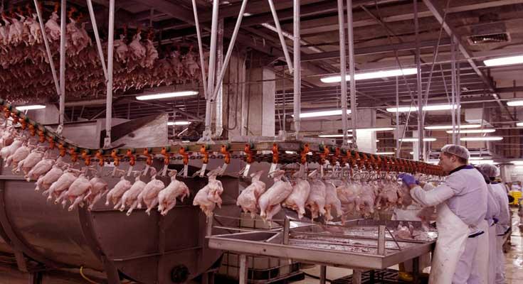 mesna industrija aditivi znanost