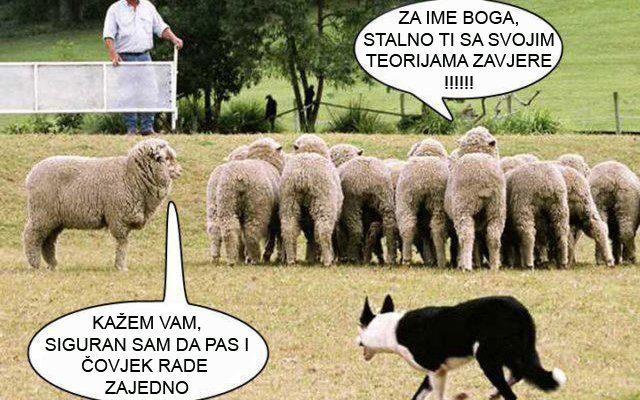 zavjera urota ovce