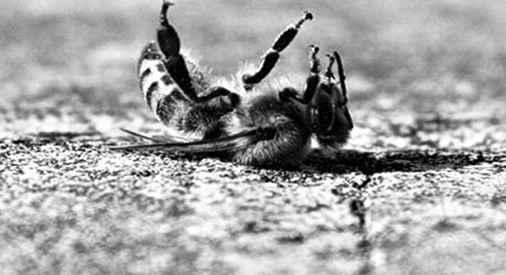 pčele izumiranje pesticidi