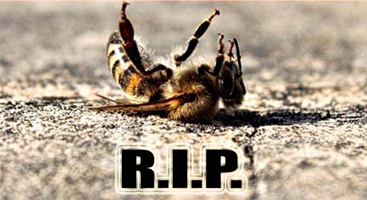 Pčele monsanto