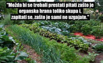 vrt, hrana